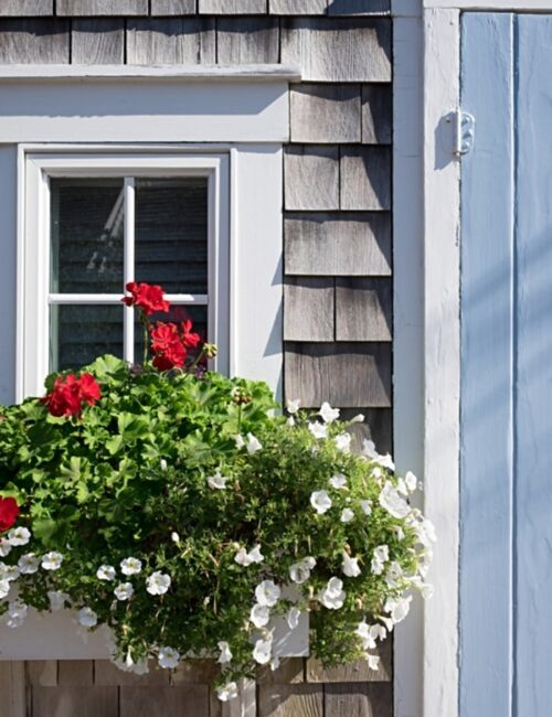 Window Box Ideas for Flowers and Plants
