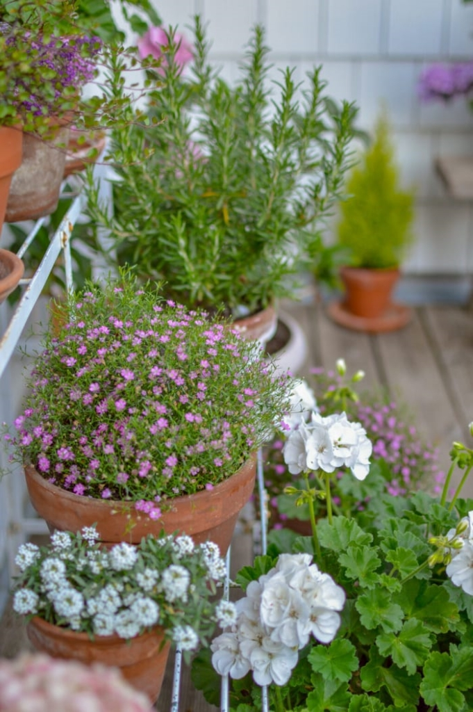 Potted Plants by Fox Hollow Cottage