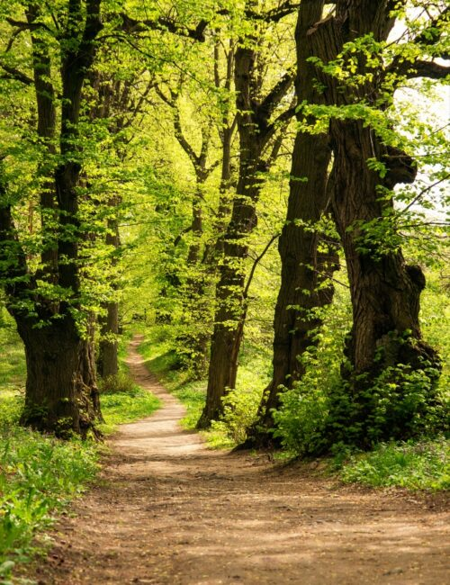 Path in forest - forest bathing