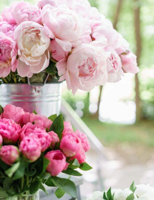 Beautiful bouquet of pink peonies