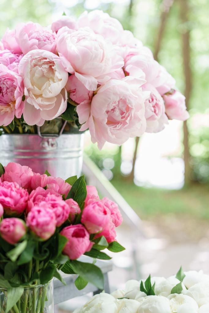 Wunderschöner Strauß rosa Pfingstrosen