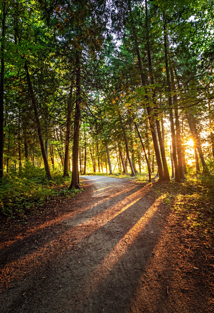 Sunset with sunbeams through the trees on a forest path