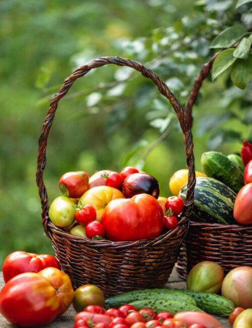 Late summer harvest crop of vegetables