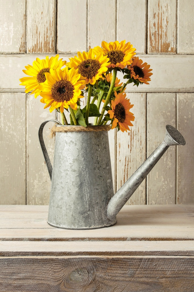Bouquet of sunflowers in silver watering can.
