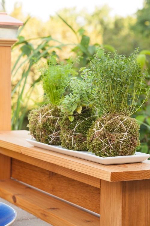 Kodoma Moss Ball with Herbs