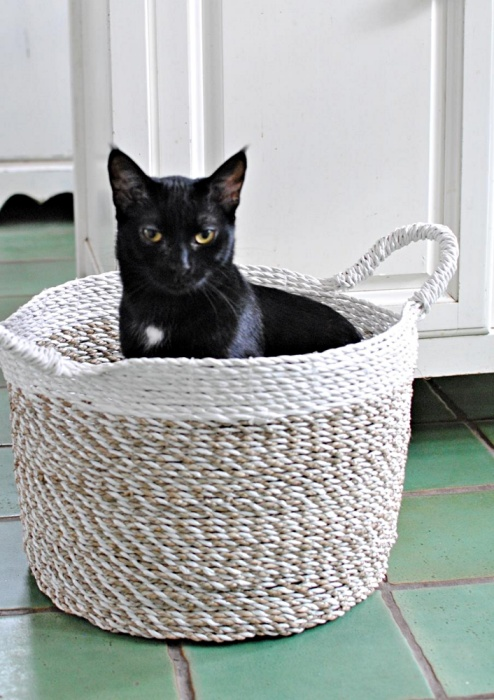 Izzy the Black Cat in a Basket