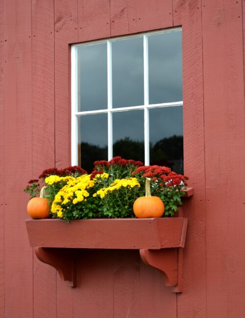 Fall Flowers in Window Box on Red Barn