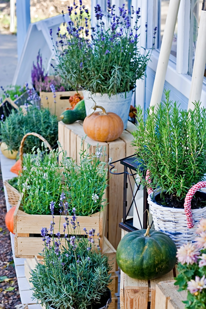 Lavender flowers and fall herbs in wooden boxes
