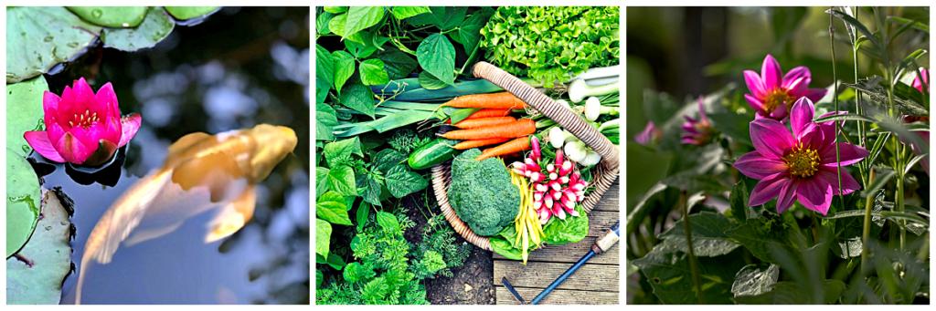September Cozy Living Series - Home, Garden, and Recipes