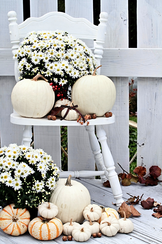 Outdoor fall arrangements - Beautiful white pumpkins and mums sitting on an old vintage chair on a porch in the autumn.