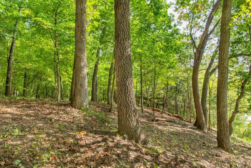 Better Place Forest in Rock River, Illinois
